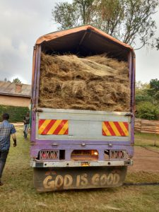 Lorry with Thatch